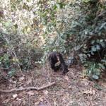 Chimpanzee with Amarula