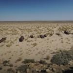Aral Seabed