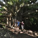 Pipiwai Trail 2