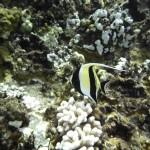 Molokini Snorkeling Tour 6