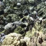 Molokini Snorkeling Tour 2