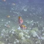 Molokini Snorkeling Tour 4